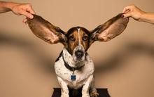 Как научиться понимать английский на слух
