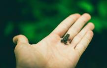 В чем разница между small, few и little?