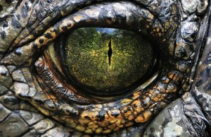 С крокодилом на борту